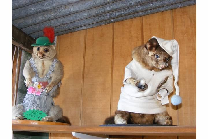 I know, right?!  Some taxidermist had to think up these costumes.  Lederhosen & Nightcap Possum??  I'd like to meet this sick mind.