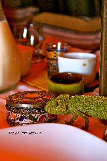 morocco sahara desert erg chigaga luxury camp chameleon