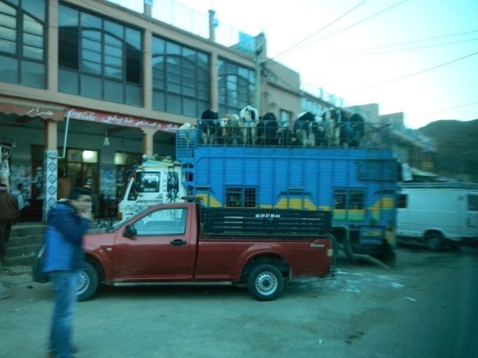 morocco double-decker cow bus
