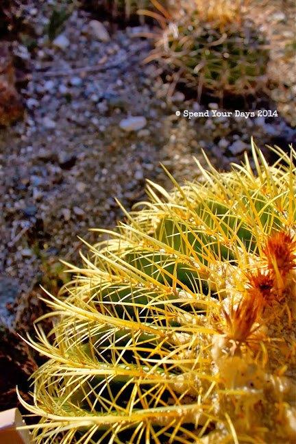 palm springs california cactus