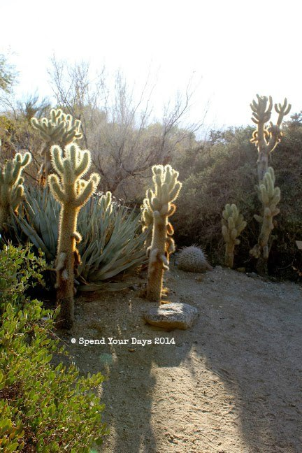 living desert palm springs california cactus