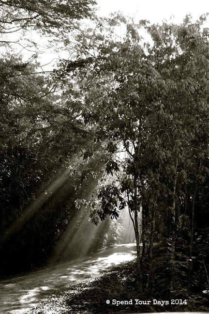 belize road jungle