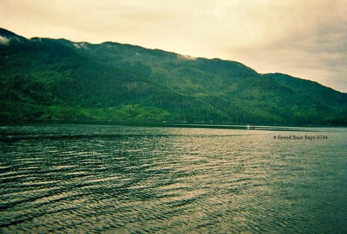 orca vancouver island johnstone strait