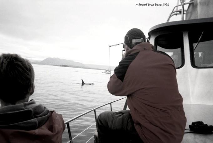killer whale orca vancouver island telegraph cove
