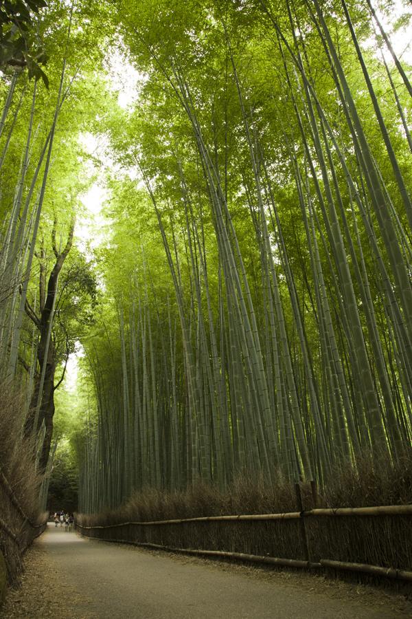 bamboo sagano kyoto japan