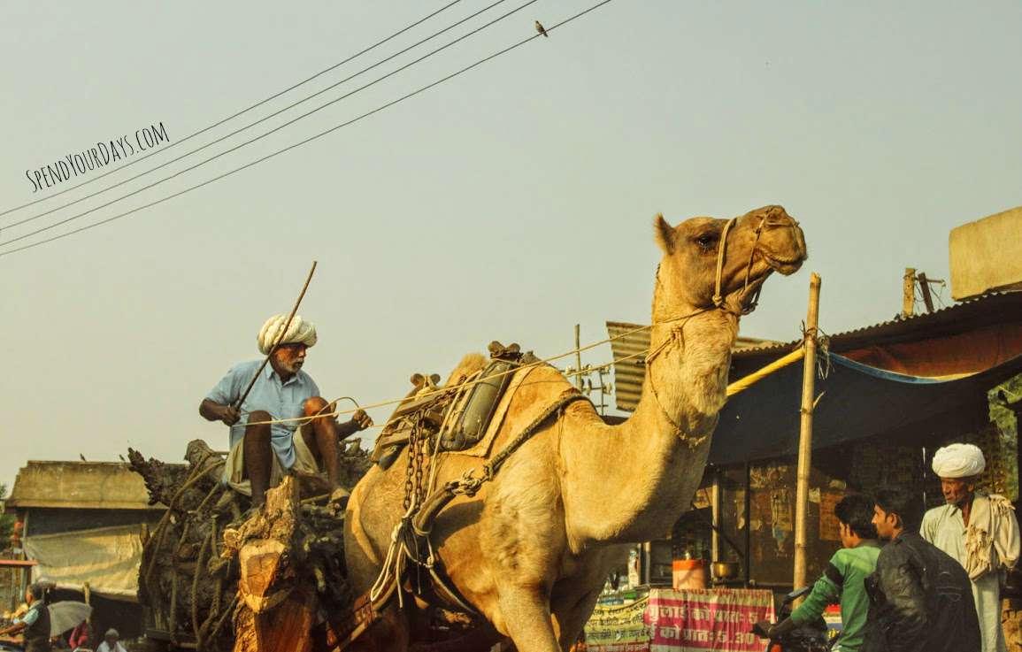 india camel cart